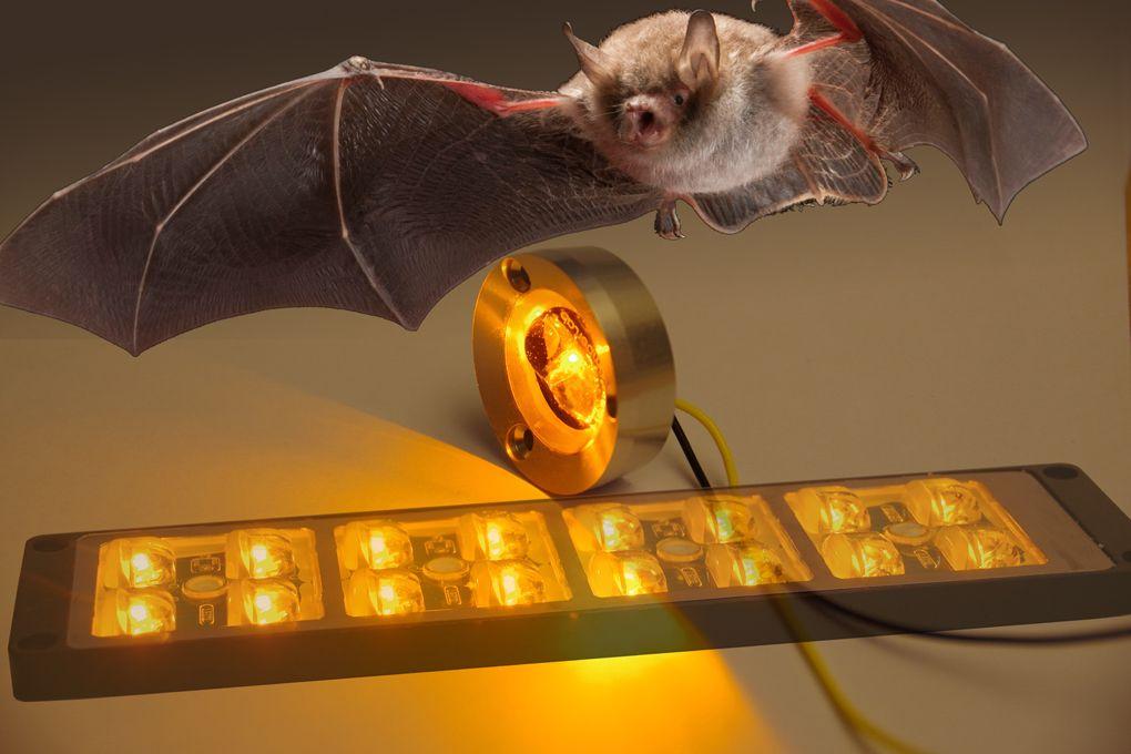 Bat Friendly Amber Colored Led